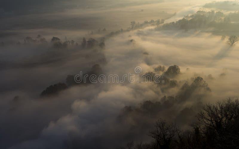 Drzewa w ranek mgle zdjęcia stock