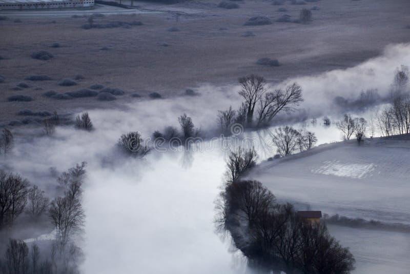 Drzewa w ranek mgle obraz royalty free
