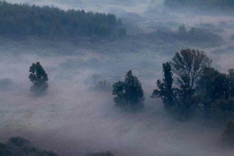 Drzewa w ranek mgle obrazy royalty free