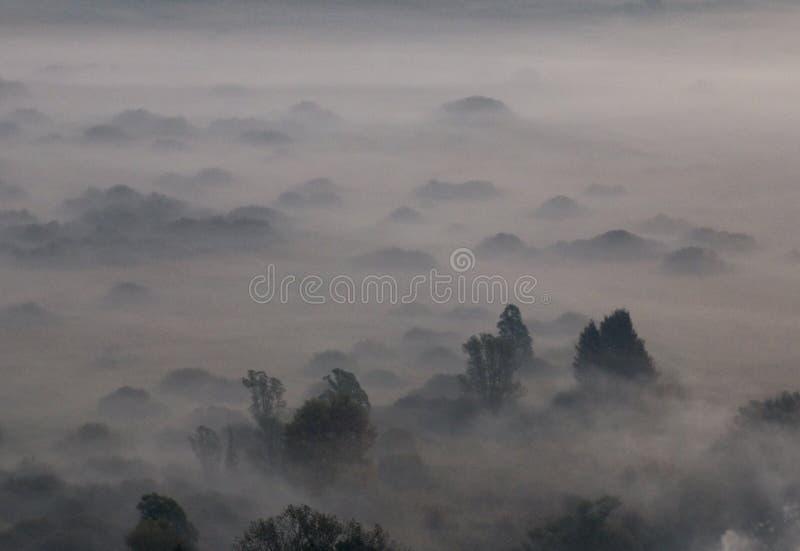 Drzewa w ranek mgle fotografia stock