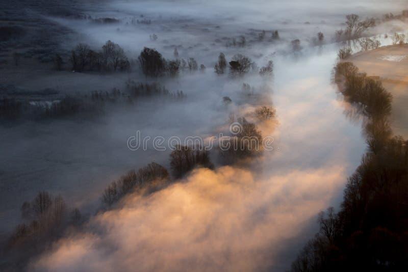 Drzewa w ranek mgle zdjęcia royalty free