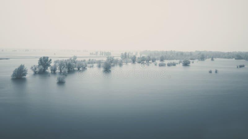Drzewa w rzece Naturalna powódź zdjęcie royalty free