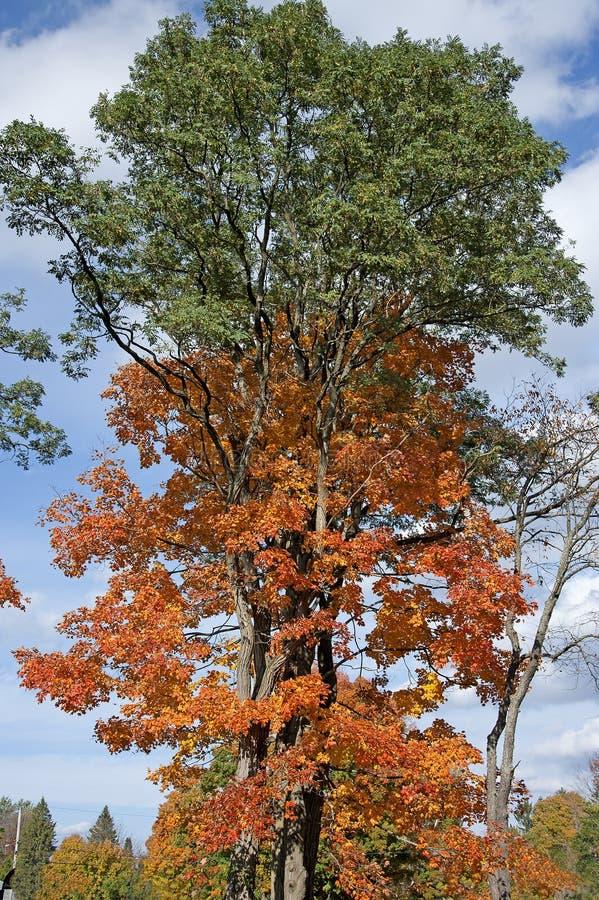 Drzewa w spadek kolorach obraz royalty free
