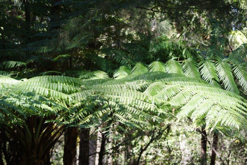 Drzewa w tropikalnym lesie deszczowym zdjęcia stock