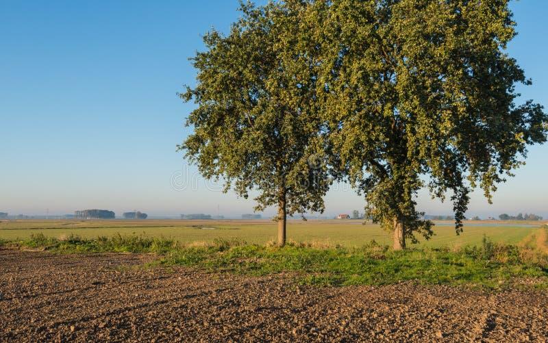 Drzewa w wczesnego poranku świetle słonecznym fotografia stock