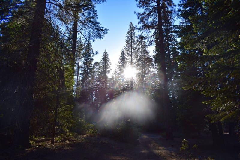 Drzewa w Wiórkarka jeziorze obrazy royalty free