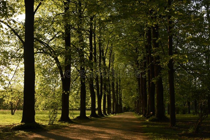 Drzewa w willi Varda parku obrazy royalty free