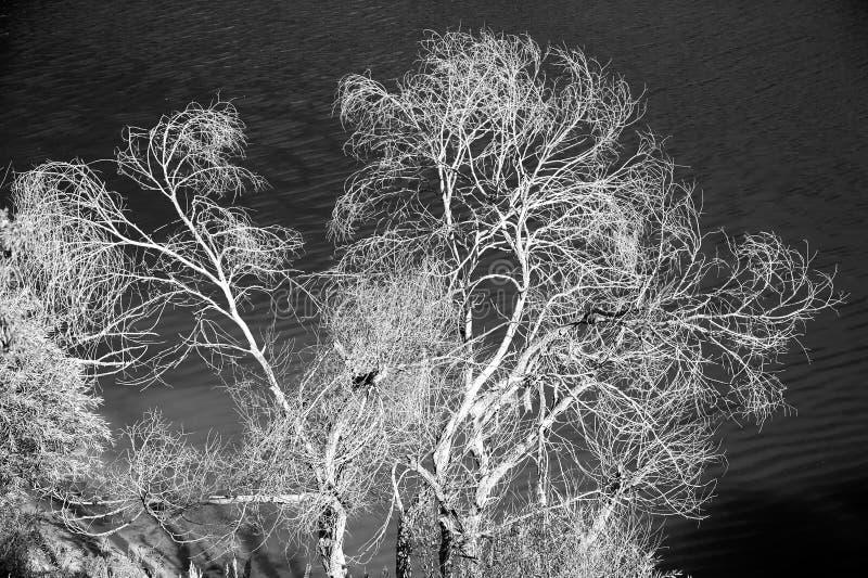 Drzewa w wodzie fotografia stock