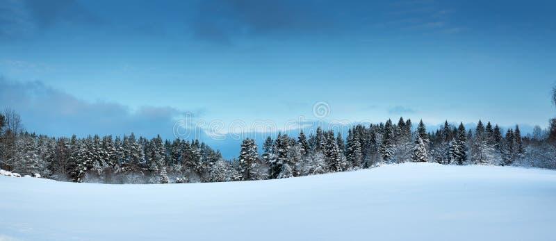 Drzewa w zima krajobrazie zdjęcia royalty free