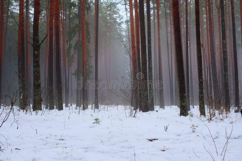 Drzewa w zima lesie obrazy stock