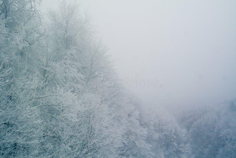 Drzewa w zimie obrazy royalty free