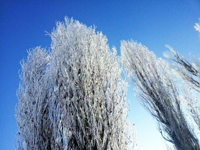 Drzewa w zimie zdjęcia royalty free