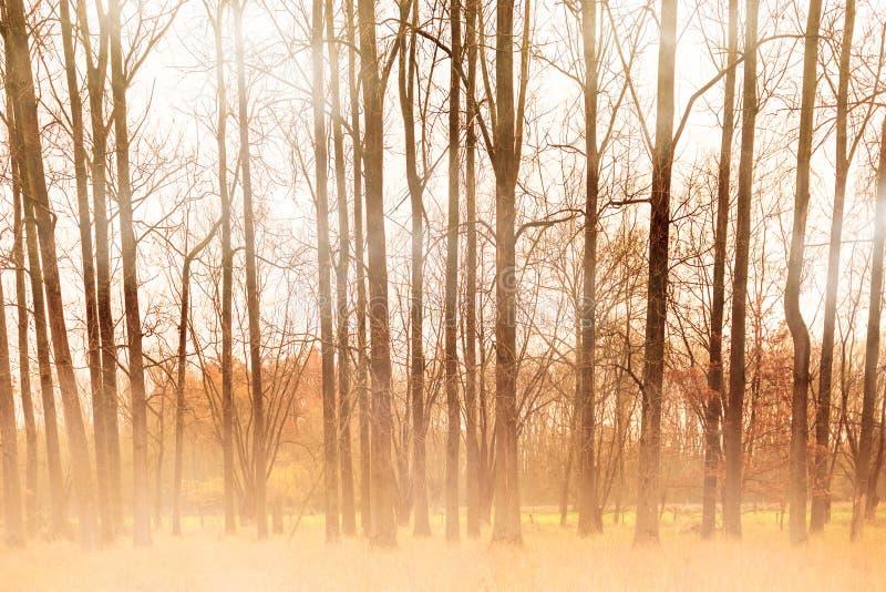 Drzewa w zimie obrazy stock