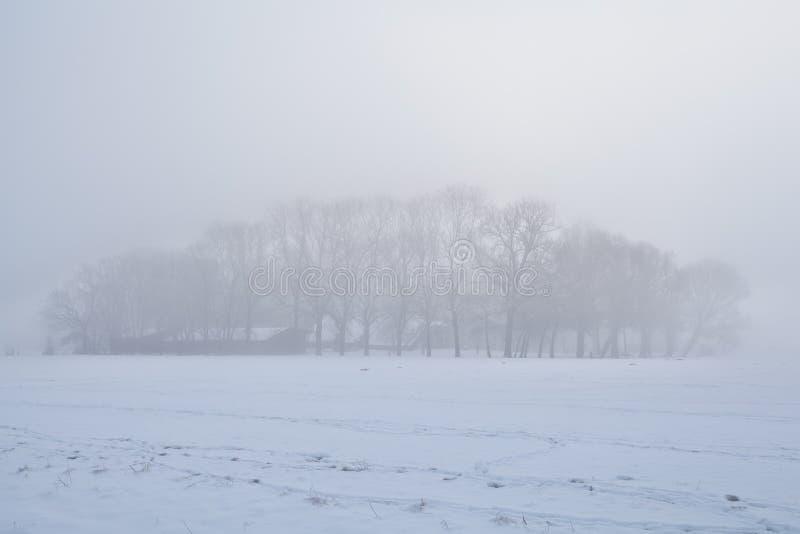 Drzewa w zwartej zimy mgle zdjęcia royalty free