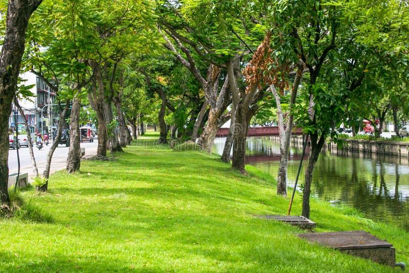 Drzewa wzdłuż Chiangmai miasta fosy, Tajlandia zdjęcia royalty free