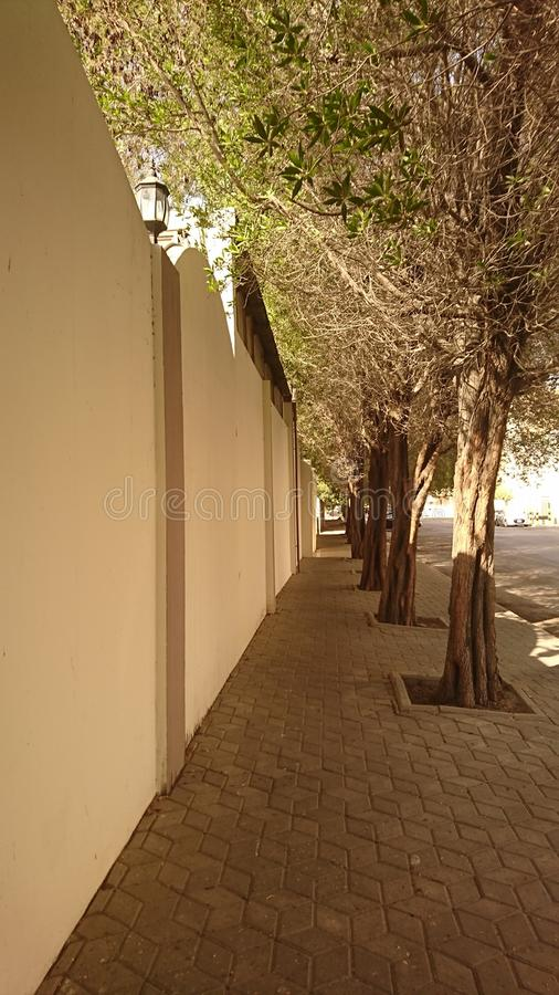 Drzewa wzdłuż footpath obrazy royalty free