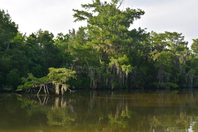 Drzewa Wzdłuż Riverways w zalewisku Odbija w wodzie zdjęcie royalty free