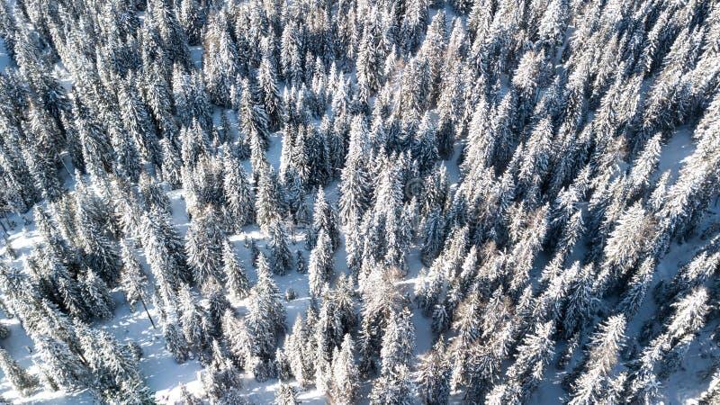 Drzewa zakrywający w śniegu od above Powietrzny obrazek w Cortina d ` am zdjęcie royalty free