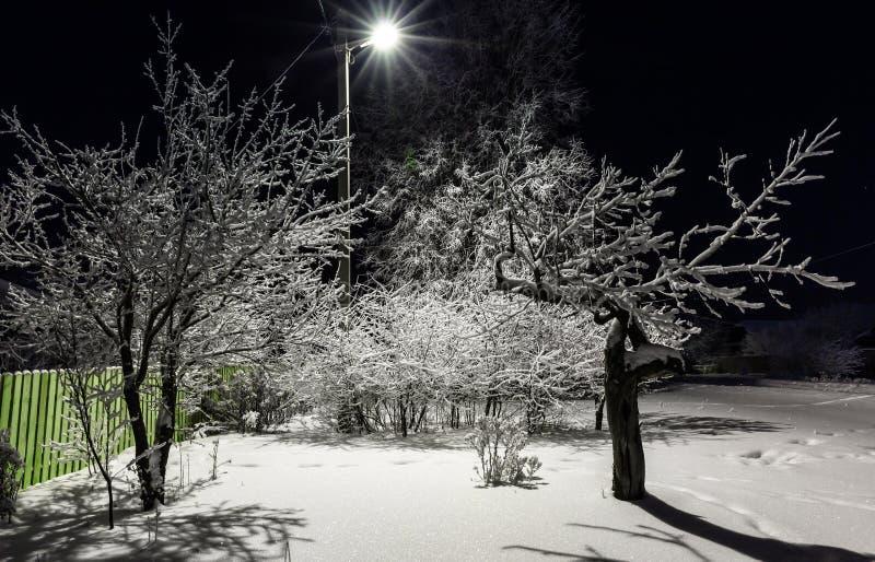Drzewa zakrywający w śniegu przy nocą zdjęcie stock