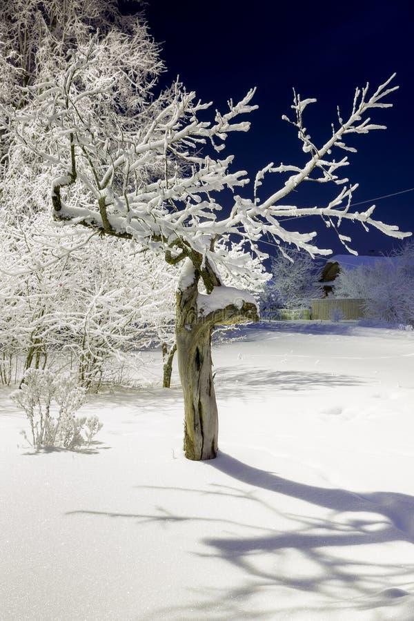 Drzewa zakrywający w śniegu przy nocą obraz stock