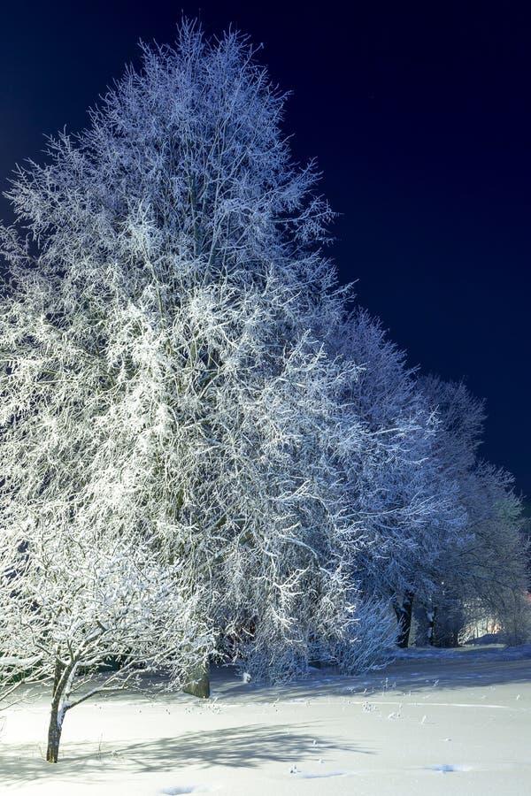 Drzewa zakrywający w śniegu przy nocą zdjęcie royalty free