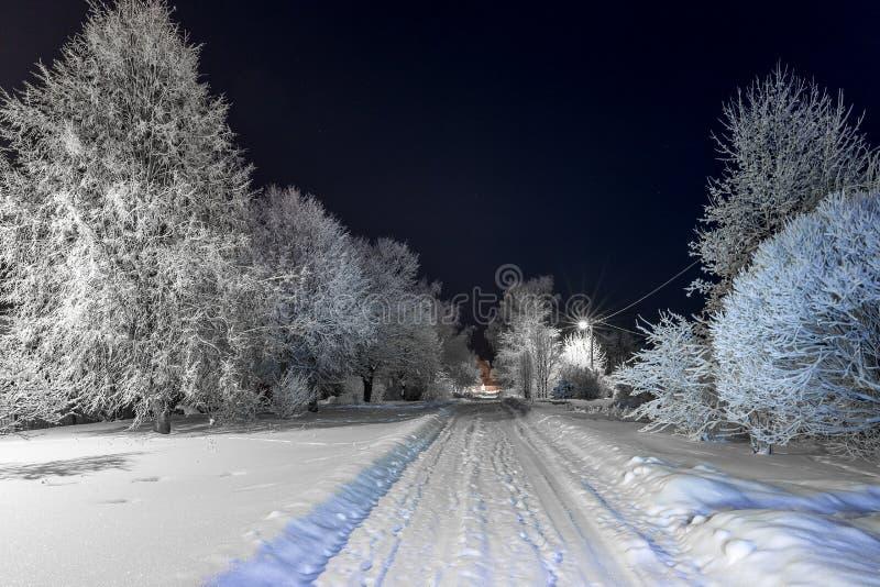 Drzewa zakrywający w śniegu przy nocą zdjęcia royalty free