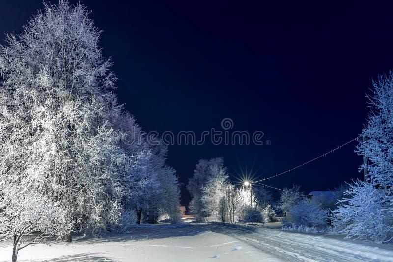 Drzewa zakrywający w śniegu przy nocą obrazy royalty free