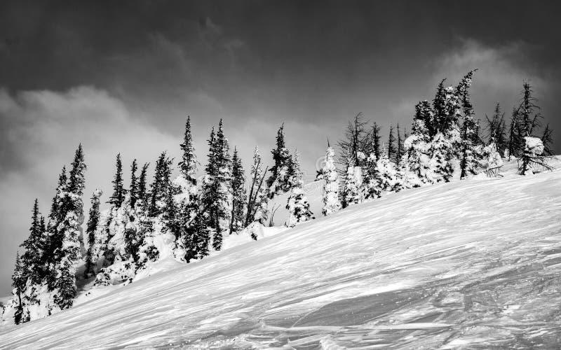 Drzewa zakrywający w śniegu w B&W obraz royalty free