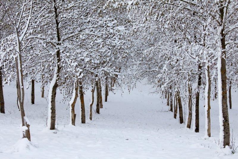 Download Drzewa Zakrywający Z śniegiem Obraz Stock - Obraz złożonej z równo, pokojowy: 28953187