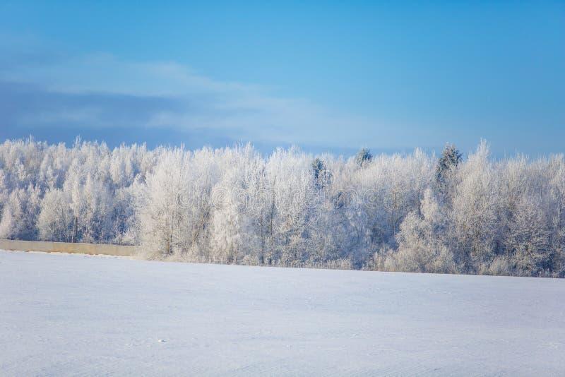 Drzewa zakrywający z hoar oszroniejącym na słonecznym dniu fotografia royalty free