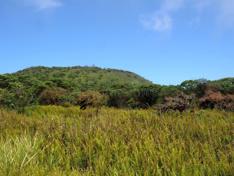 Drzewa zakrywający z liszajami w kraterze Cuando losu angeles Roca wulkan, Santa Cruz, Galapagos, Ekwador obrazy royalty free