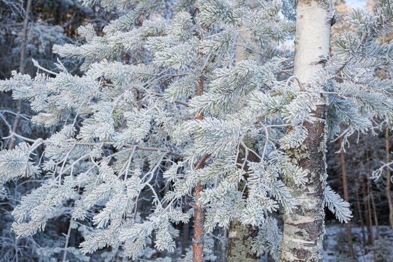 Drzewa zakrywaj?cy w hoarfrost przy jeziornym brzeg fotografia stock