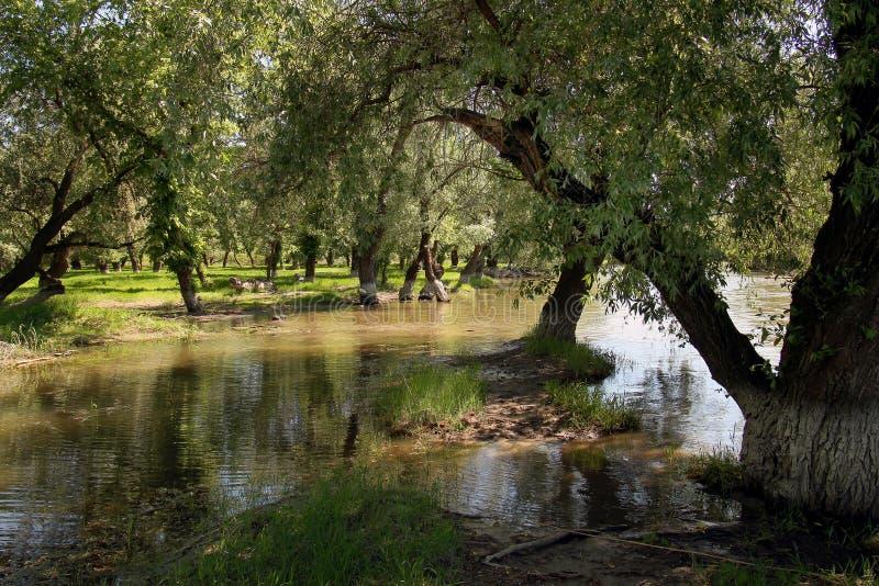 Drzewa zalewający z wodą na brzeg rzekim Obrazek dla blogu obraz royalty free