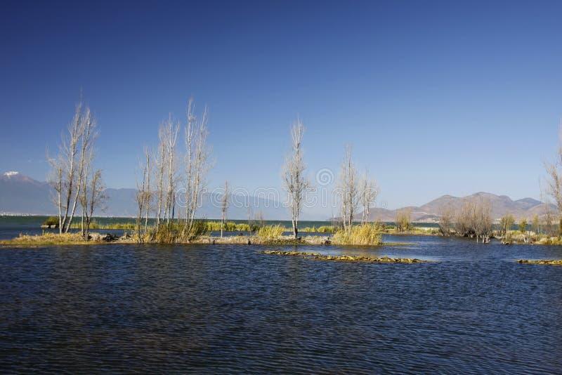 Drzewa zasadzający w jeziorze w bagna parku zdjęcia royalty free