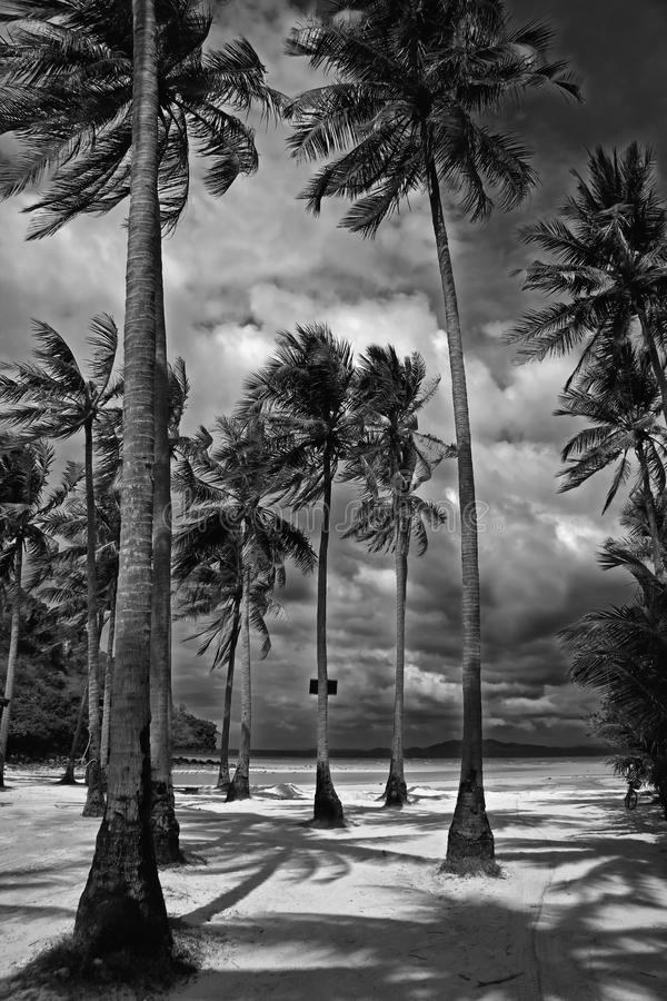 drzewka palmowe obraz royalty free