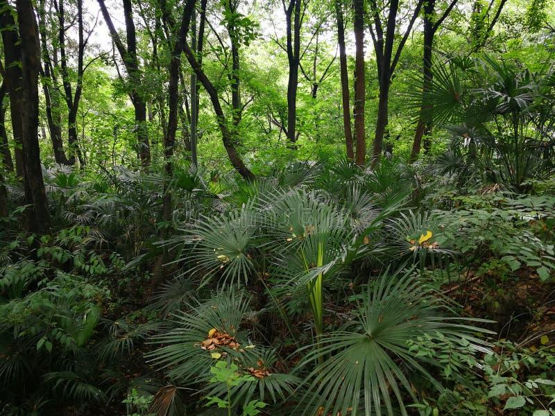 Drzewka palmowe zdjęcie stock