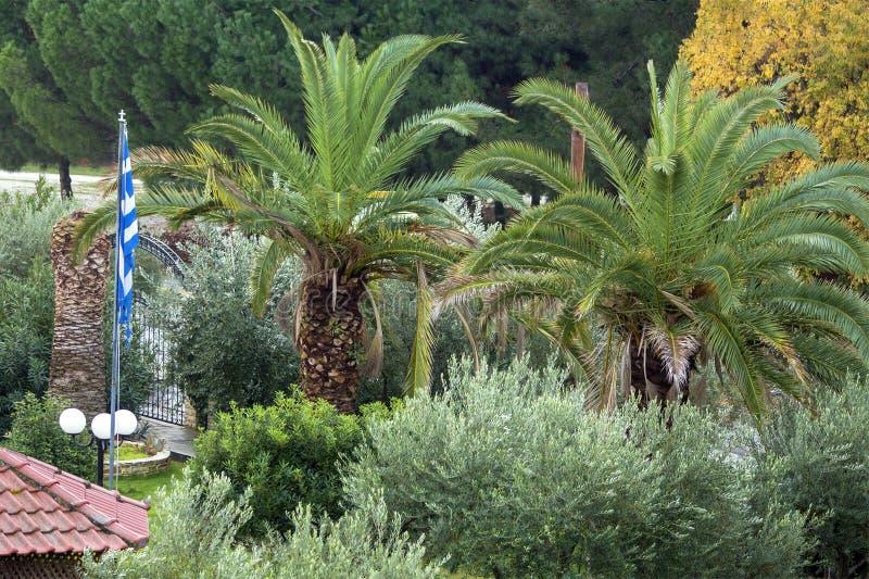Drzewka palmowe, drzewa oliwne i conifers, zdjęcia stock