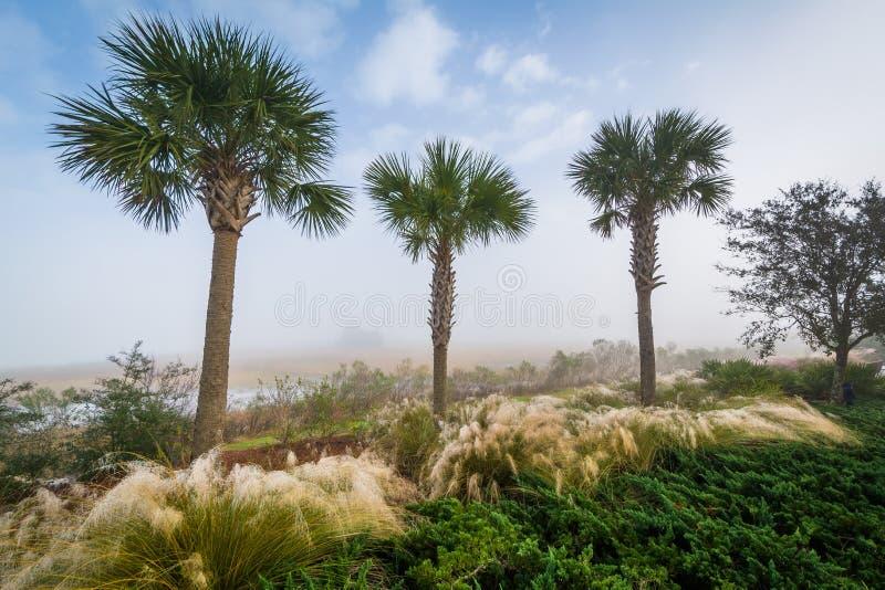 Drzewka palmowe i bagna wzdłuż bednarz rzeki przy Pamiątkowym nabrzeże parkiem w górze Przyjemnej, Charleston, Południowa Karolin zdjęcie royalty free