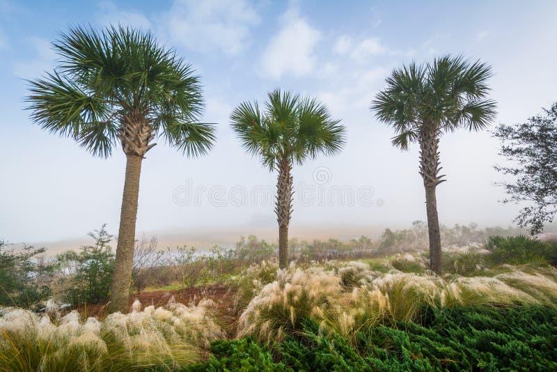 Drzewka palmowe i bagna wzdłuż bednarz rzeki przy Pamiątkowym nabrzeże parkiem w górze Przyjemnej, Charleston, Południowa Karolin fotografia royalty free