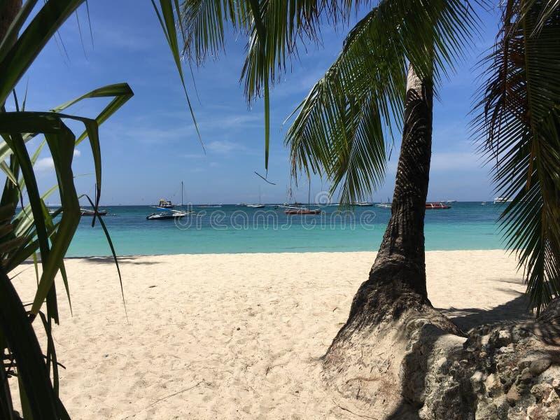 Drzewka palmowe i biały piasek zdjęcie royalty free