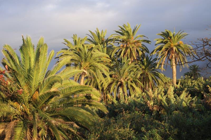 Drzewka palmowe i chmurni nieba obraz stock