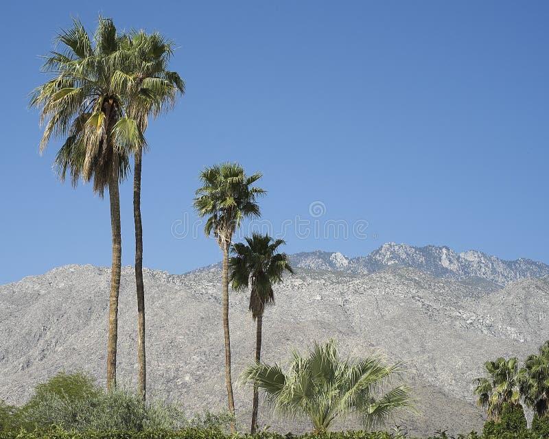 Drzewka palmowe i góry zdjęcie stock