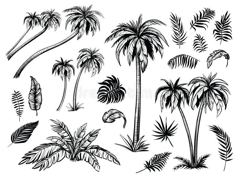 Drzewka palmowe i liście Czarne kreskowe sylwetki Wektorowa nakreślenie ilustracja royalty ilustracja