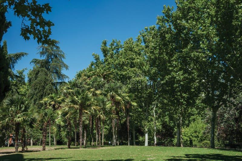 Drzewka palmowe i luksusowa roślinność w obfitolistnym ogródzie w Madryt obraz stock