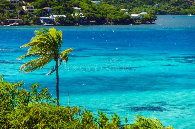 Drzewka Palmowe i morze obraz royalty free