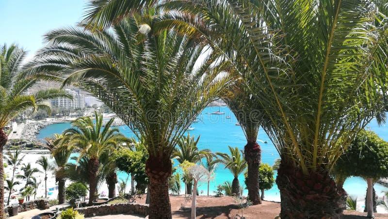 Drzewka palmowe i morze zdjęcie royalty free