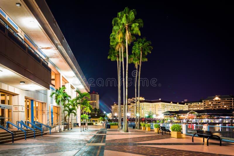 Drzewka palmowe i powierzchowność convention center przy nocą wewnątrz zdjęcie stock