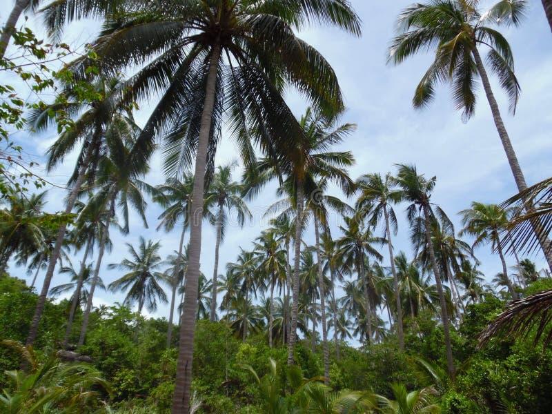 Drzewka palmowe Koh Tao fotografia stock