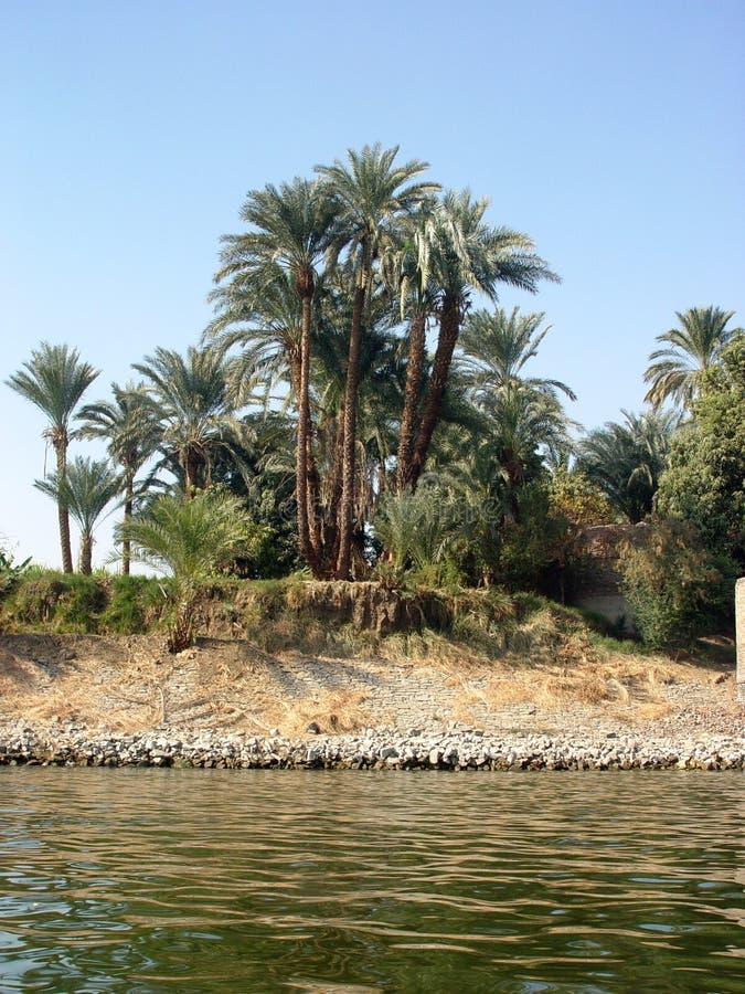 Drzewka palmowe na bankach Nil fotografia royalty free