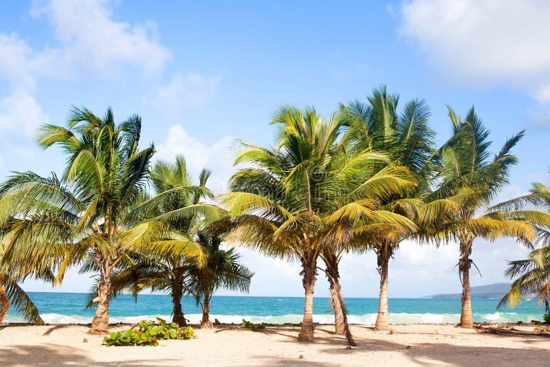 Drzewka palmowe na plaży z białym piaskiem, błękitnym morzem i niebem z chmury tłem, obrazy stock